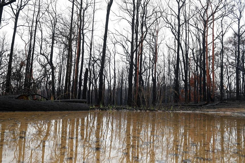 Rain pools in large puddles amid burnt bushland at Bilpin, in the Blue Mountains, Australia, on Jan 17, 2020.