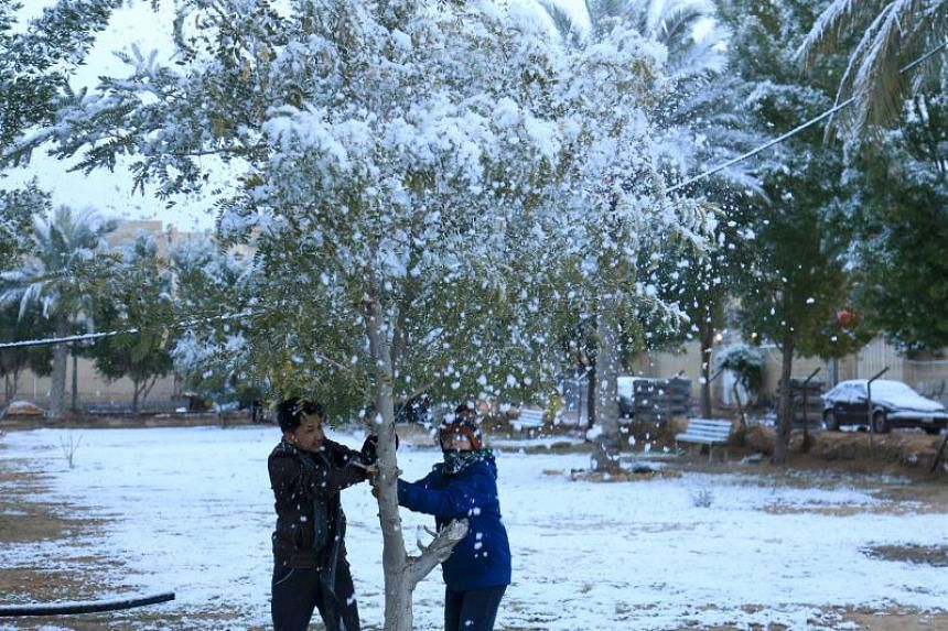 Boys shake snow off a tree at a park in the holy Shiite city of Karbala in Iraq on Feb 11, 2020.