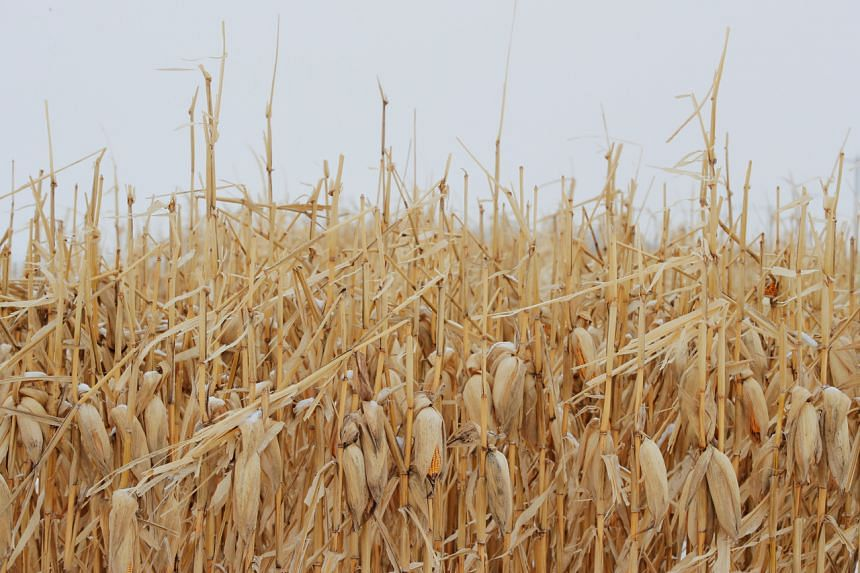 Climate change could expand farmland globally by almost a third, a new study has found.