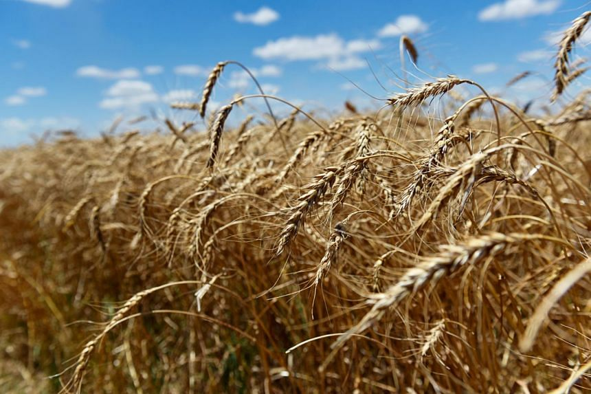 The new interest in American goods follows China's publication of a list of 696 American products, including wheat, that will be eligible for relief from retaliatory duties.