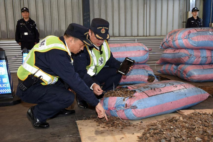 Chinese Customs officials inspecting scales of pangolins they seized from a ship in Shenzhen on Nov 29, 2017.
