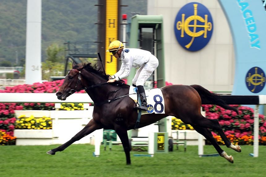 Golden Sixty steps out as the leading chance in tomorrow's HK$10 million (S$1.8 million) Hong Kong Classic Cup, after securing the Hong Kong Classic Mile, the first leg of the Four-Year-Old Classic Series.