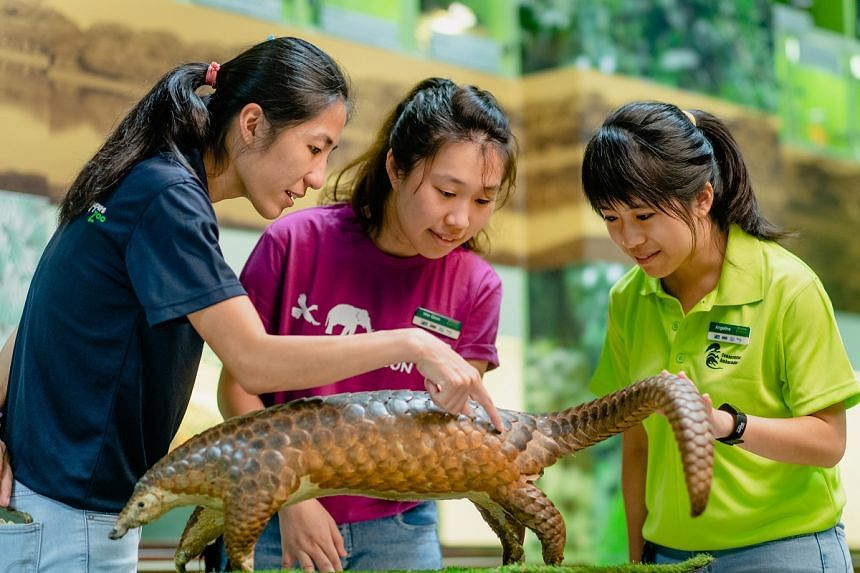 JCU alumna Lim Wei Qian (centre) works with volunteers to manage educational programmes on wildlife conservation at Jurong Bird Park, Night Safari, River Safari and Singapore Zoo, as part of its Volunteer Engagement team. PHOTO: TED CHEN