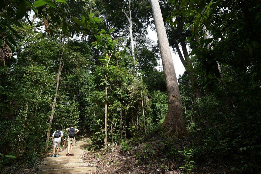 Trekkers at Bukit Timah Nature Reserve, on Feb 2, 2017.
