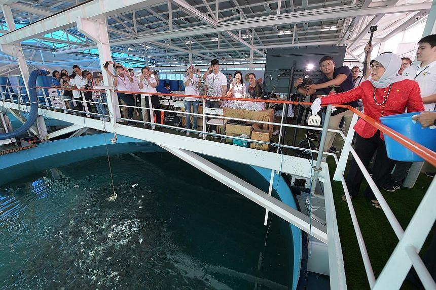 Madam Halimah, who was guest of honour at the event, also took part in activities such as feeding fish (above) at the farm.