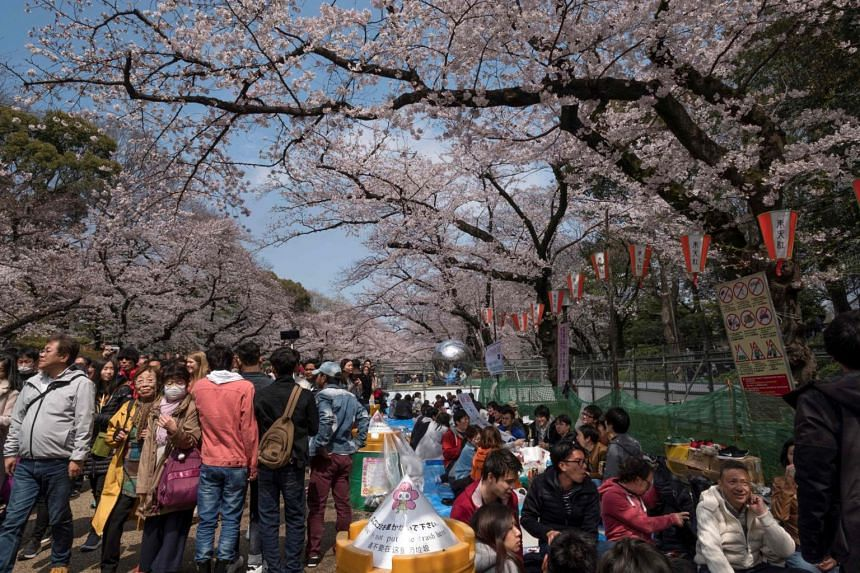 People admiring the cherry blossoms in full bloom at Ueno Park in Tokyo on March 31, 2019, .