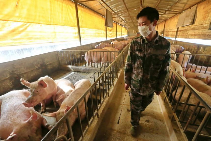 African swine fever, which is deadly for pigs but is not known to harm humans, first broke out in China in 2018.