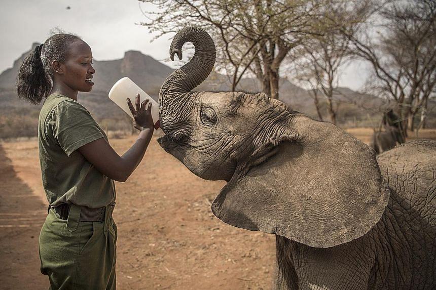 A caretaker feeding a baby elephant at the Reteti Elephant Sanctuary.