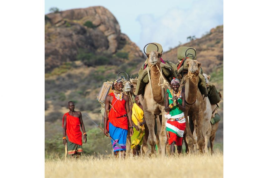 Samburu guides with their camels in the Karisia Hills.