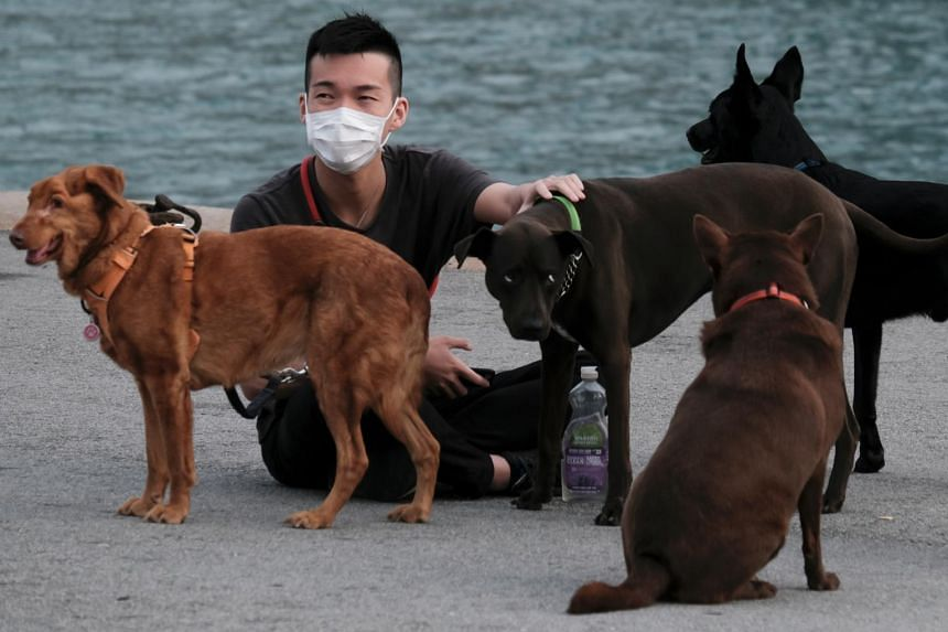 In a photo from March 6, 2020, a man wearing a protective face mask sits next to his dogs in Hong Kong.