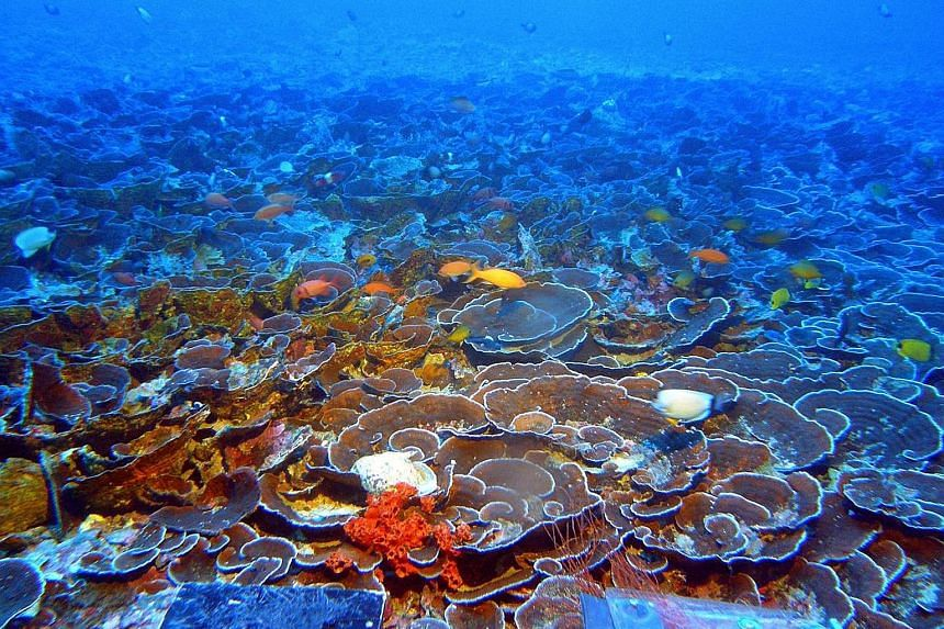 A mesophotic coral ecosystem in the Au'au Channel in Hawaii. Coral reef experts say healthy reefs could protect coastlines against erosion by functioning like breakwaters and reducing the full force of storm energy.