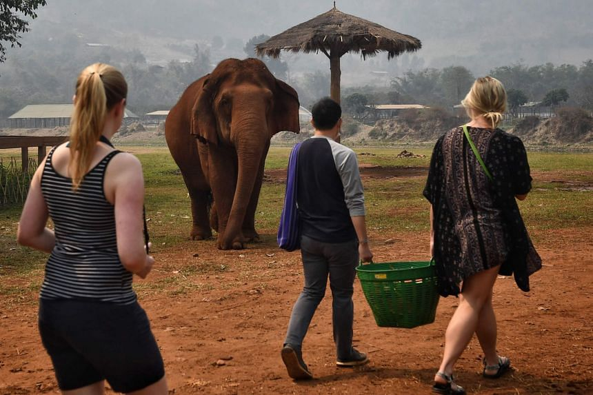 Tourists observe elephants rescued from the tourism and logging trade at the Elephant Nature Park in Chiang Mai, Thailand, on March 13, 2020.