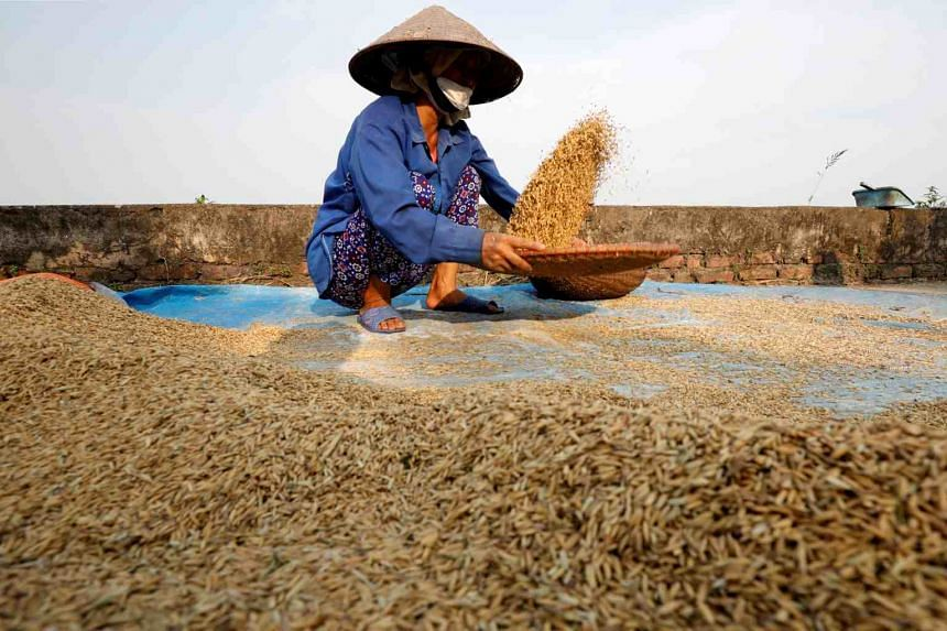 In a photo taken on June 10, 2019, a farmer harvests rice by a paddy field outside Hanoi, Vietnam.
