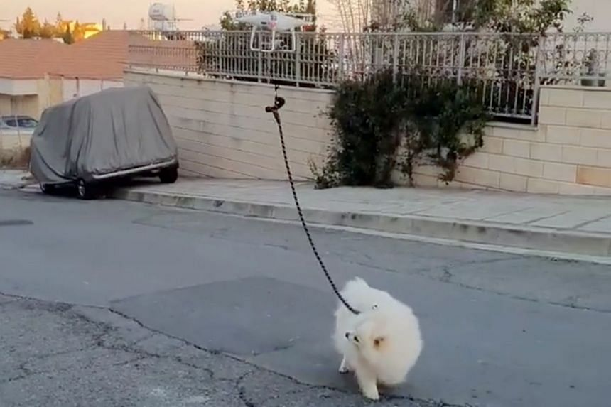 The video shows Oliver, a small white dog trotting gamely along as he follows the lead of a drone, which hovers overhead.