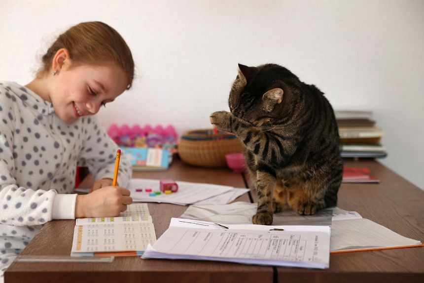 A girl studies at home in Germany during the coronavirus pandemic with the family cat for company.