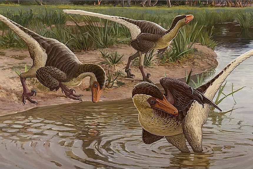 According to palaeontologist Steven Jasinski, who led the research, the two-legged Dineobellator notohesperus was a swift, active predator with claws that would have been several inches long. PHOTO: REUTERS