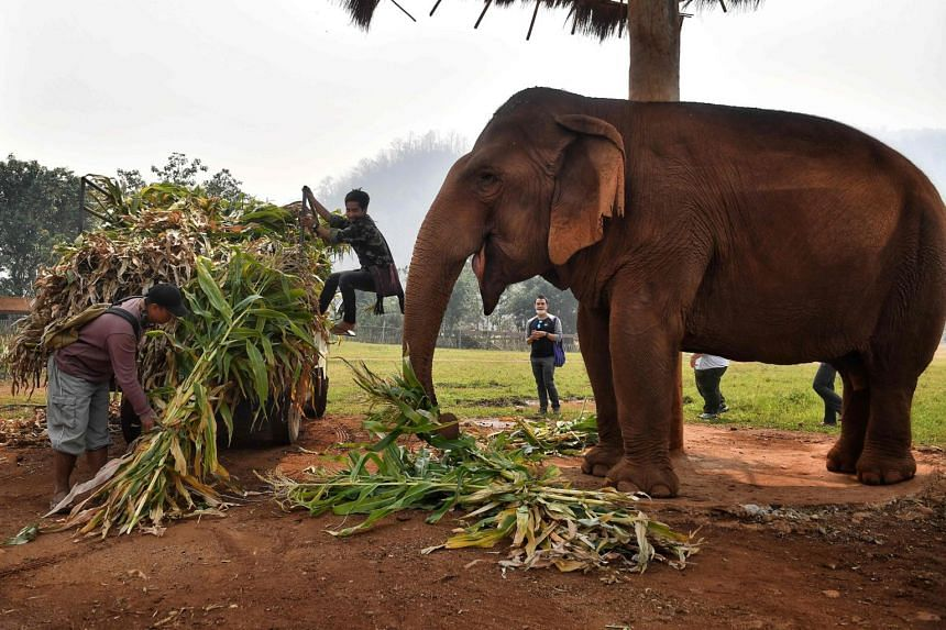 With global travel paralysed the animals are unable to pay their way, including the 300kg of food a day a captive elephant needs to survive.