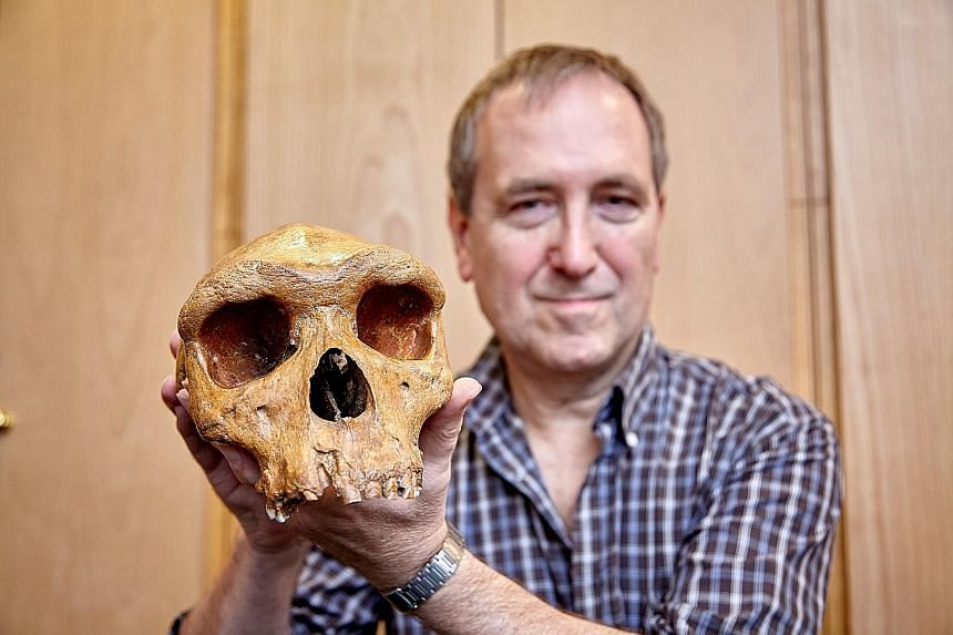 Anthropologist Chris Stringer of the Natural History Museum in London with the Broken Hill skull. He said its age, which has been determined to be about 299,000 years old, indicates at least three human species inhabited Africa around 300,000 years a
