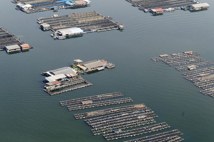 The floating fish farms in the Strait of Johor on Jan 18, 2017.