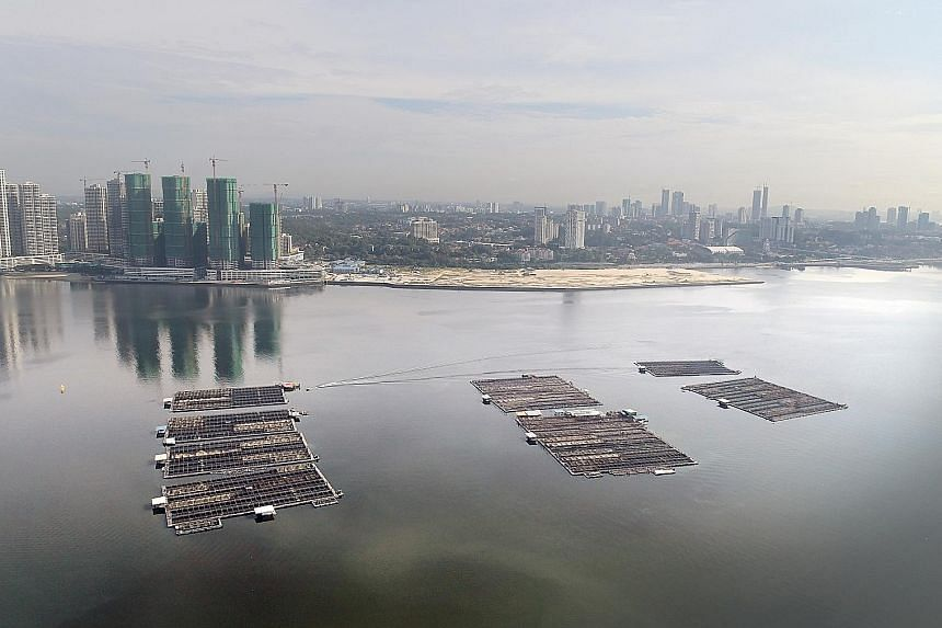 Floating fish farms in the Strait of Johor, north of Singapore. The fish-rearing capacity in those waters could soon reach maximum production levels as the country scales up local food production. Workers harvesting fish at Barramundi Asia, currently