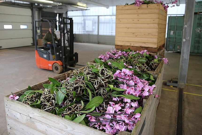 Orchids being dumped in Bleiswijk, The Netherlands, in a photo taken last week. The coronavirus pandemic is severely affecting the Dutch flower industry.