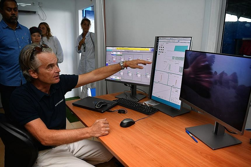 """Singapore Aquaculture Technologies co-founder Dirk Eichelberger said of the smart camera system to detect disease spread in fish stock: """"It can't tell you what the disease is, but it can warn you about it."""""""