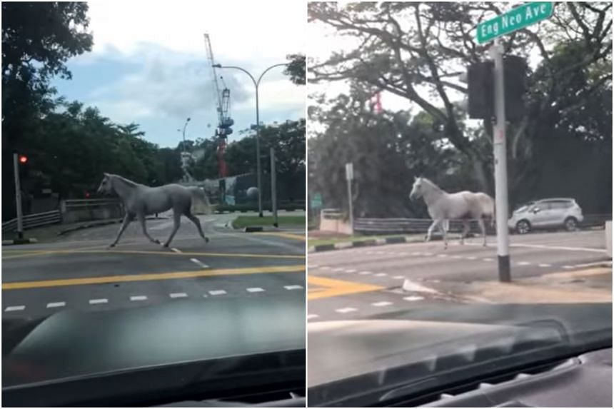 A 15-second long video showing the horse trotting along on the road was posted on Facebook on April 5, 2020.