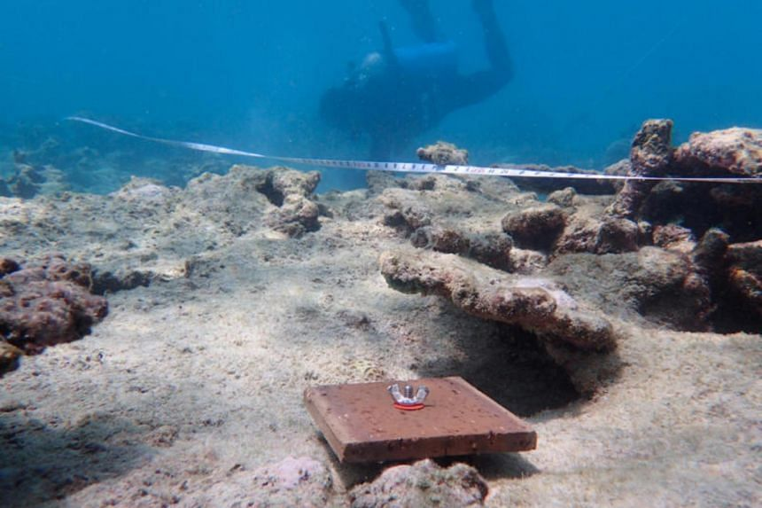 A recruitment tile is deployed on the Northern region of the Great Barrier Reef.