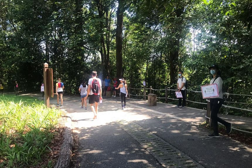 People mostly in pairs or alone at Bukit Timah Hill on April 10, 2020. NParks officers were stationed around with signs reminding people to keep 1m apart.