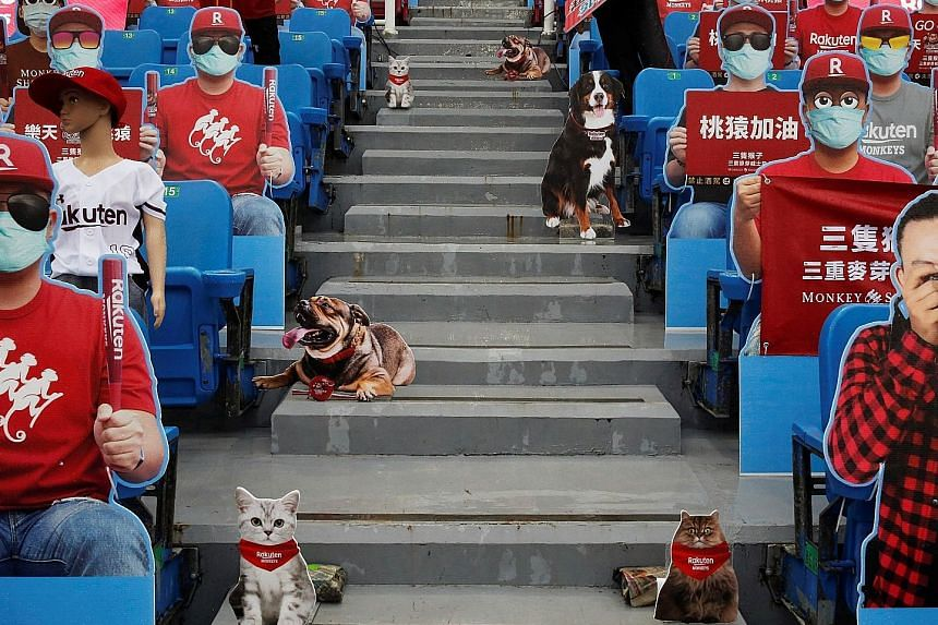It might feel like a full house in Taoyuan City with fans bringing their pets. But it turns out they are just dummies in place of the audience ahead of Taiwan's first professional baseball league game of the season. With Saturday's game postponed owi