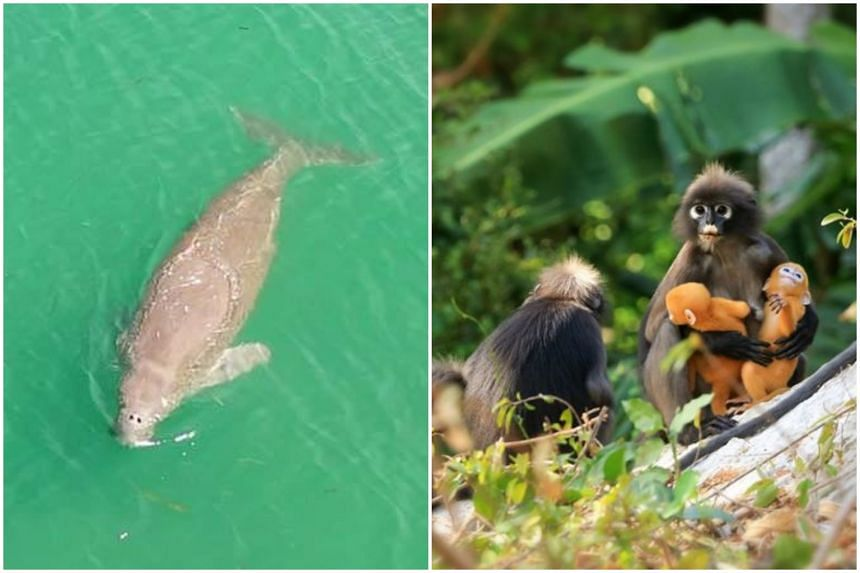 Park officials have recorded increased sightings of dolphins, dugongs, reef sharks and primates.