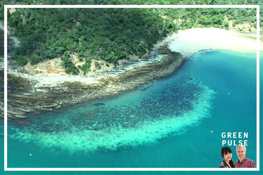 A badly bleached reef off Great Keppel Island, Queensland, in March 2020. Coral bleaching is caused by prolonged heat stress.