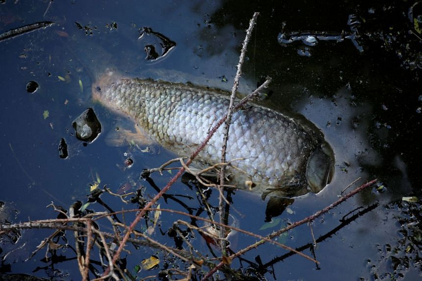 Floating dead fish are seen in the Escaut river in Valenciennes, France, April 30, 2020.