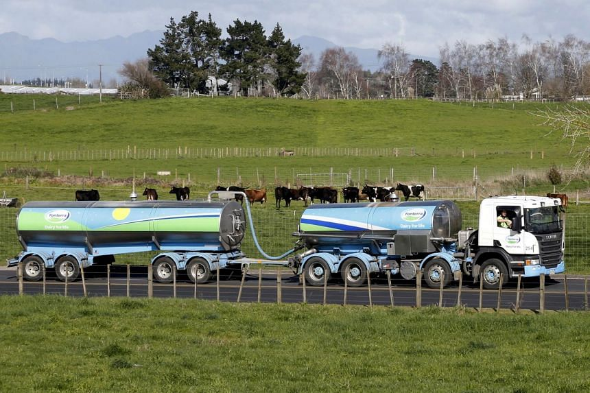 A milk tanker drives past dairy cows near Hamilton, New Zealand, on Aug 6, 2013.
