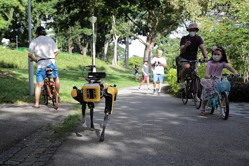 Curious park goers checking out Spot, a four-legged robot that started patrolling Bishan-Ang Mo Kio Park yesterday to remind people of safe distancing measures. It is fitted with cameras, enabled by video analytics developed by GovTech, to help it es