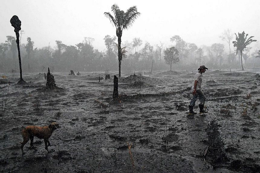 A Brazilian farmer surveying a burnt area of the Amazon rainforest near Porto Velho, Rondonia state, in August last year during devastating record wildfires in the country. Deforestation in the Brazilian Amazon hit a new high in the first four months