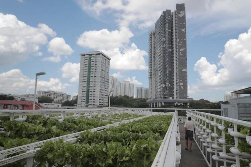 Local agri-tech firm Citiponics' vertical farming plot at the multi-storey carpark rooftop at Block 700 Ang Mo Kio Avenue 6.