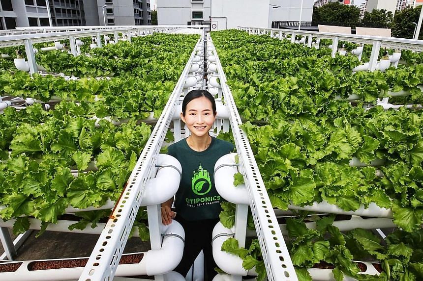 Citiponics co-founder Danielle Chan at the local agri-tech firm's carpark rooftop farm in Ang Mo Kio. The company plans to take part in the latest tender and expand its production capacity, but that will depend on further on-site assessments.