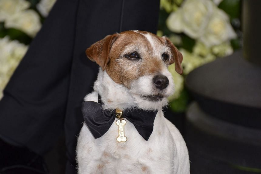 A 2012 photo shows Uggie posing with cast members at the 84th Annual Academy Awards in Hollywood, California.