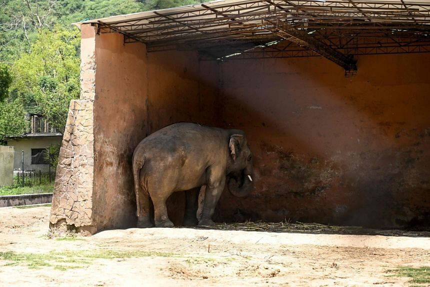 Outrage over the treatment of Kaavan at the capital's Islamabad Zoo went global several years ago.