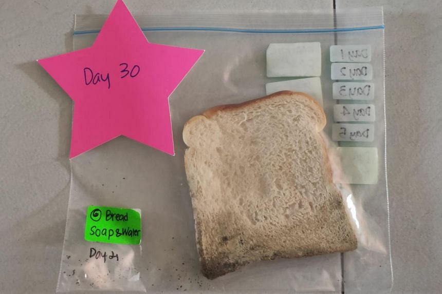 After 30 days, the bread slice touched by hands that had been washed with soap stayed almost mould-free.