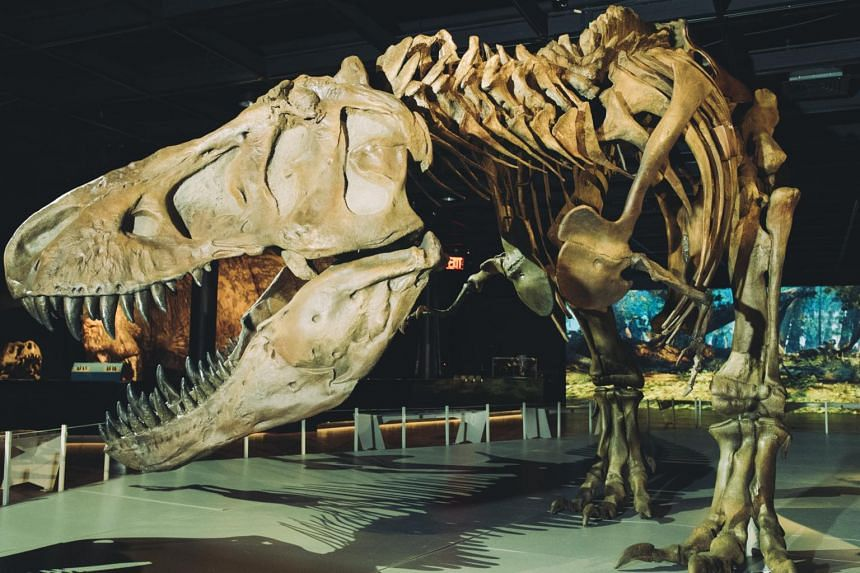 The cataclysmic impact doomed T-Rex and everything it ever hunted to extinction.