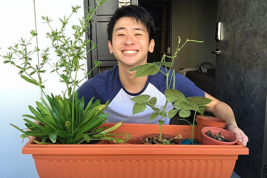 Undergraduate Wafir Hakim (above) has been growing plants such as coriander and chilli to cut down on trips to the supermarket.