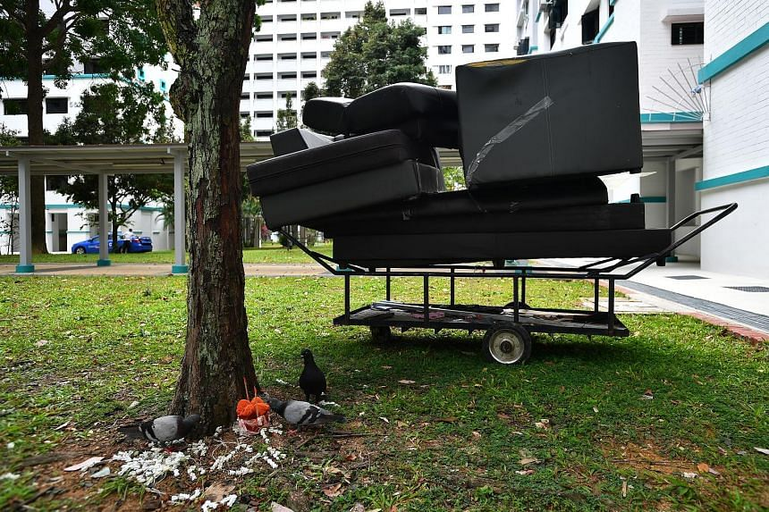 Engineer Mark Rober built an eight-part obstacle course to deter squirrels from stealing bird food in his yard. A photo taken in January of pigeons feeding on offerings left under a tree in Hougang, with a discarded sofa nearby. Being holed up at hom