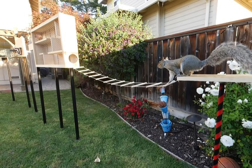 Engineer Mark Rober built an eight-part obstacle course to deter squirrels from stealing bird food in his yard.