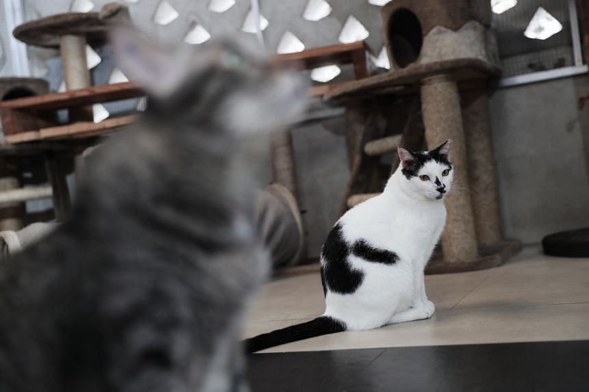 A file picture of cats. A retiree has divorced his wife because of the cats she kept.