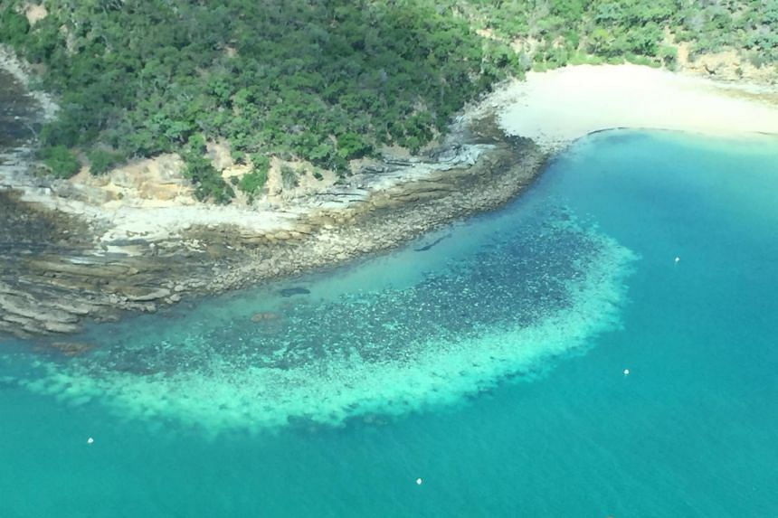 Scientists fear the coral recovers less each time after the third bleaching in five years.