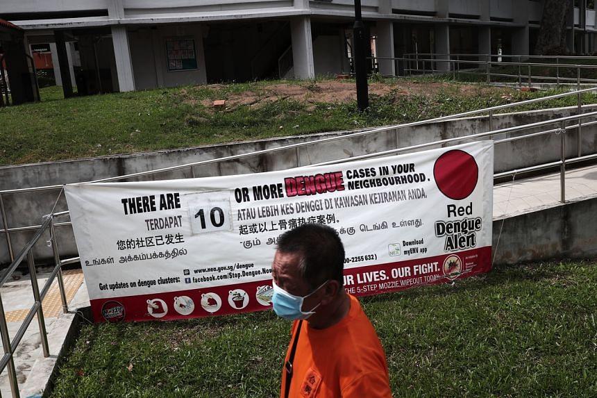 Singapore is now in its peak dengue season.