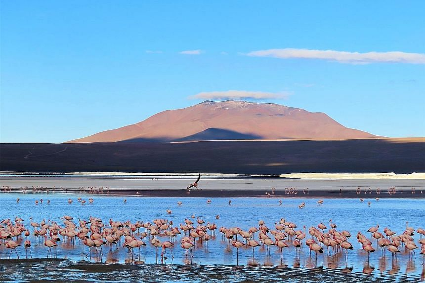 Bolivia's must-see sights include its salt flats, Laguna Colorada (above) and Anaconda Canyon.