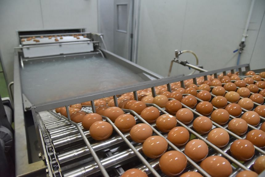 An eggs pasteurisation facility at N & N Agriculture.